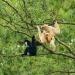 Giá trị về đa dạng sinh học ở Vườn Quốc gia Phong Nha - Kẻ Bàng